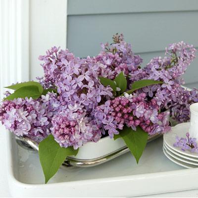 lilac-fb